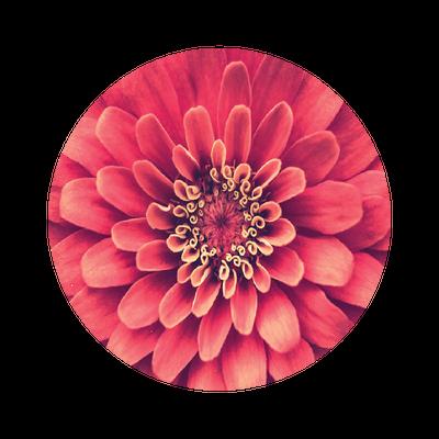 The O Flower