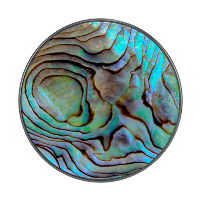 Paua Abalone